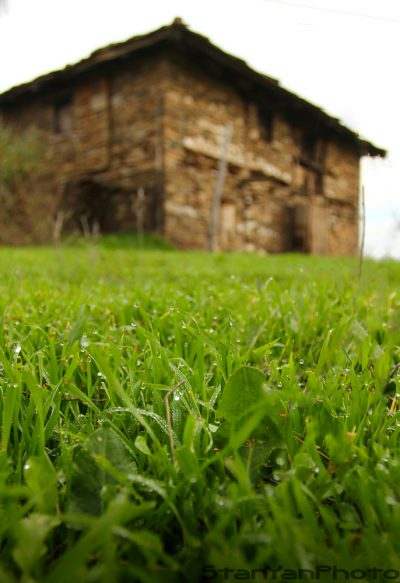 Old house grass